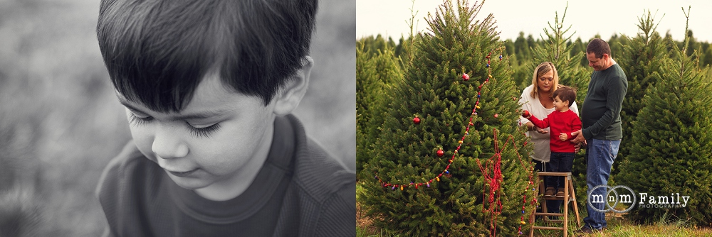 Christmas Tree Farm Mini Sessions | Chester County Family ...